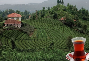 Turkish Tea from Trebizond