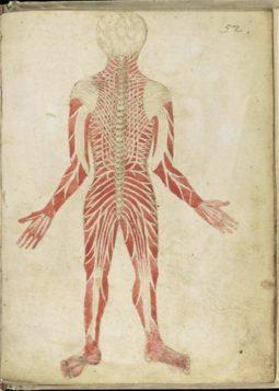 Galen's human anatomy